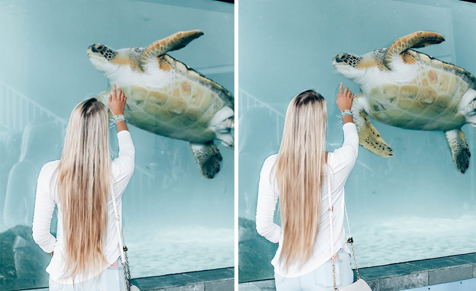 think gypsy with sea turtle at mote marine